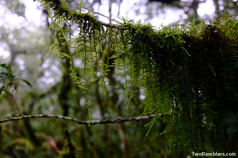 Moss hanging from a branch