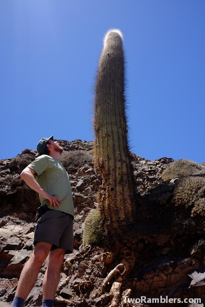 One of the Two Ramblers and a tall cactus