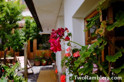 Backyard with many plants, geraniums in full bloom