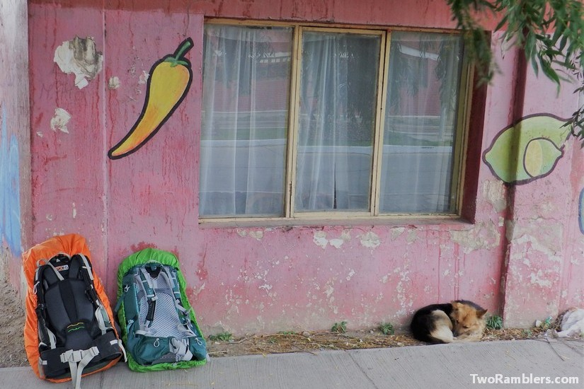 Dog and backpacks, Chile Chico, Chile