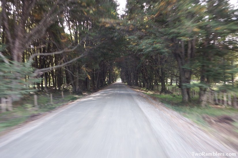 Forest road , Carretera Austral, Chile