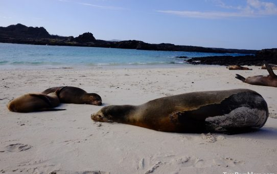 On the Galapagos Islands