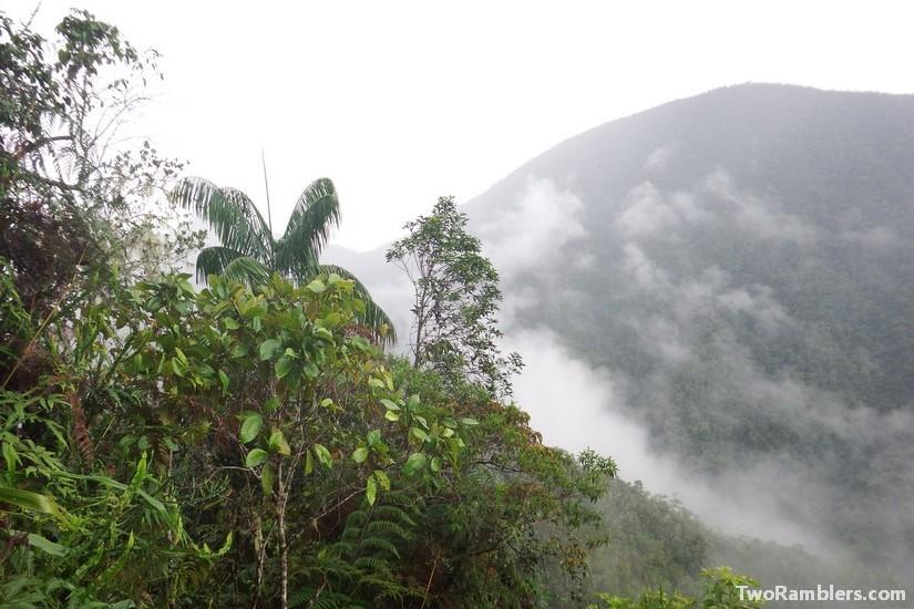 Podocarpus National Park