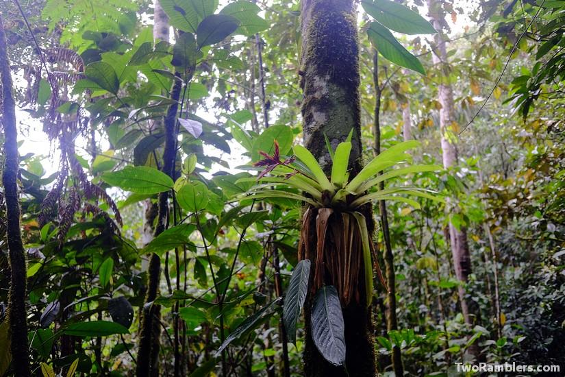 Podocarpus National Park, Ecuador
