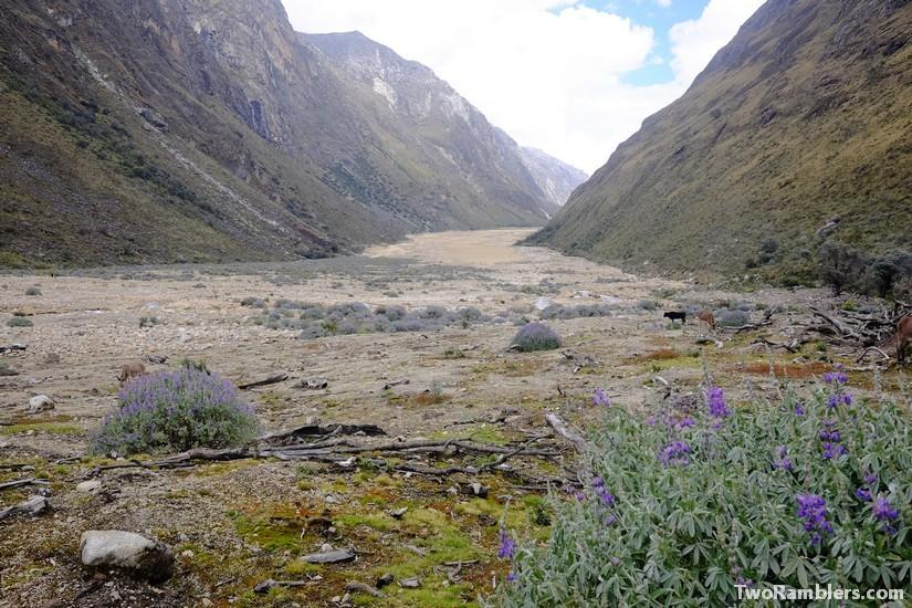Sand and purple flowers, Santa Cruz Trek, Peru