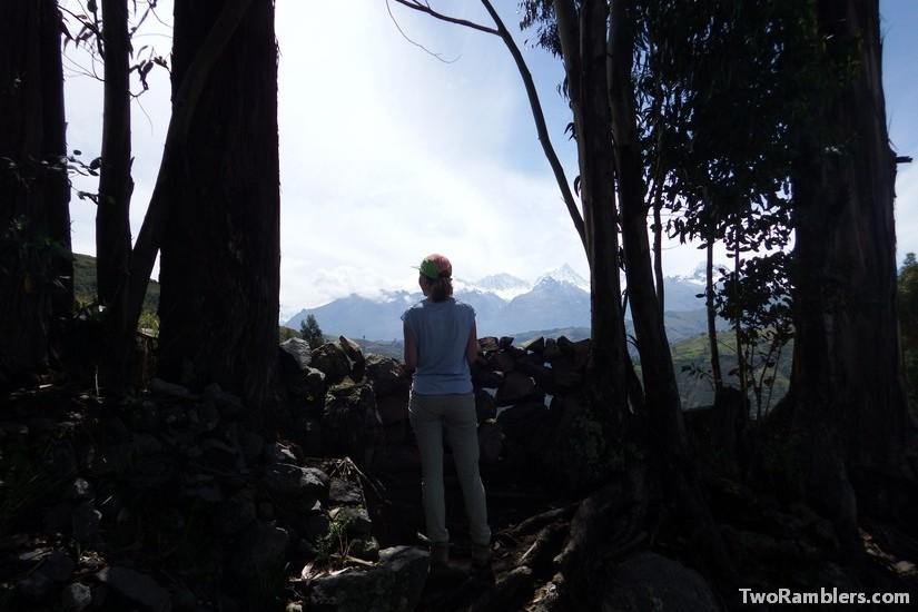 Eucalyptus trees, Cordillera Blanca, Huaraz, Peru