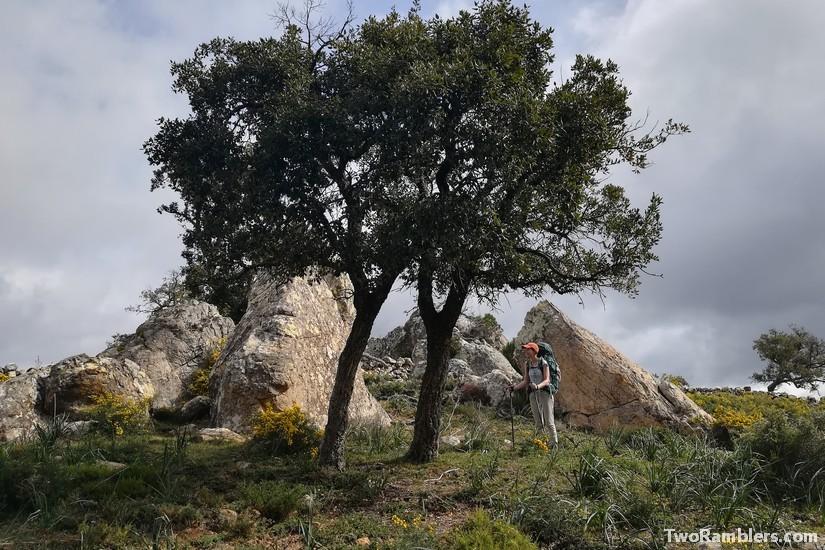Oaks and rocks, Andalucía